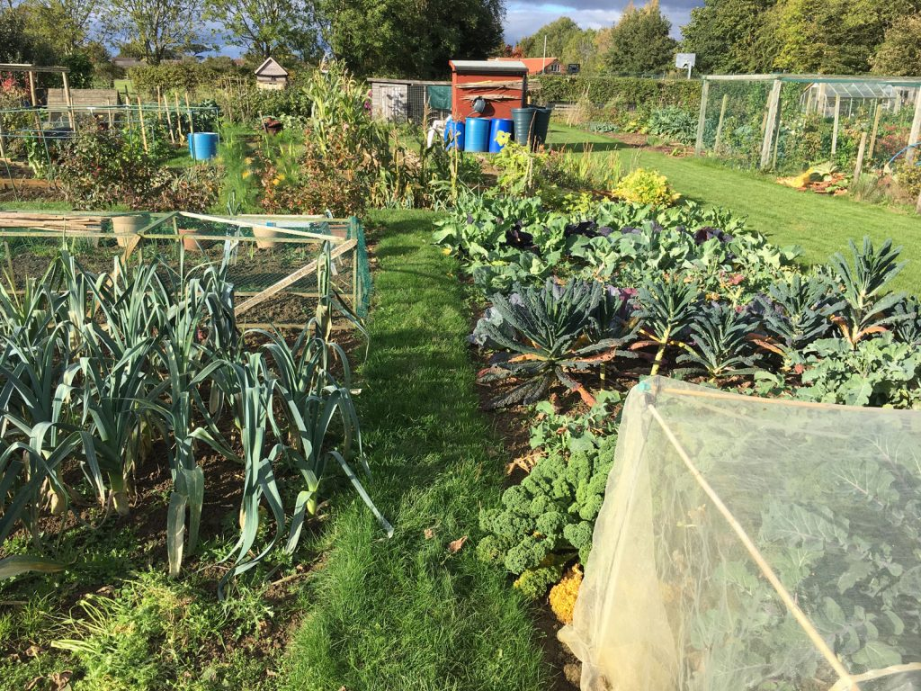 allotment-leeks