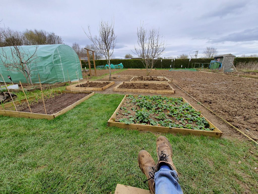 raised beds at plot c3b